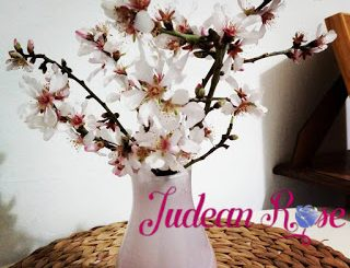 Flowering+Almond+Branch_Logo-2c5e390e5d058665c122c797f30510106276cf5c