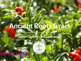 Ancient+Roots+Homepage-b21080411f80427d85317bb73bd780f13e953e13